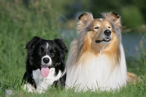 Dogs, Our Loyal Friends, Part 3
