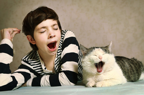a siberian cat and a boy yawn