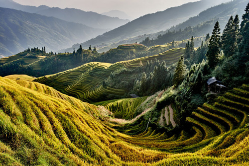 Rice terraced fields of Wengjia longji Longsheng Hunan China
